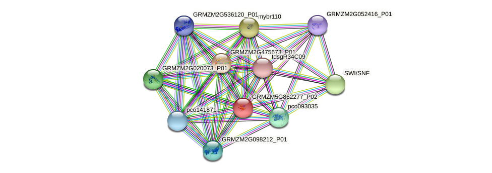 GRMZM5G862277_P02 protein (Zea mays) - STRING interaction network