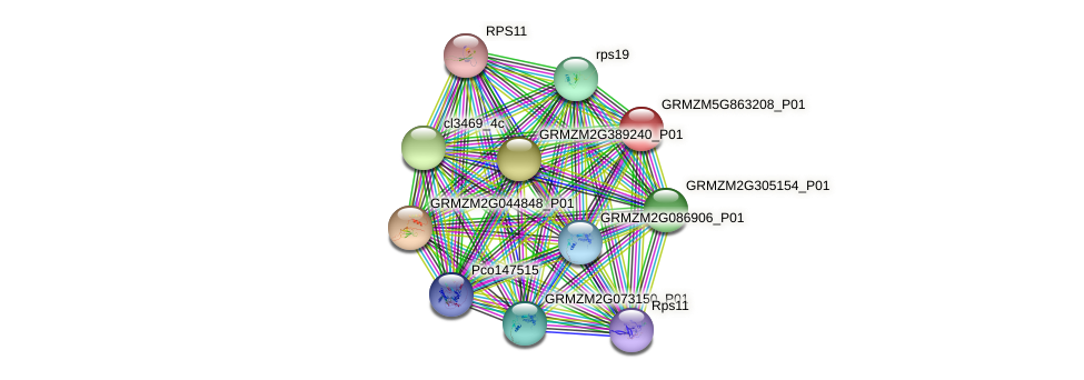 GRMZM5G863208_P01 protein (Zea mays) - STRING interaction network