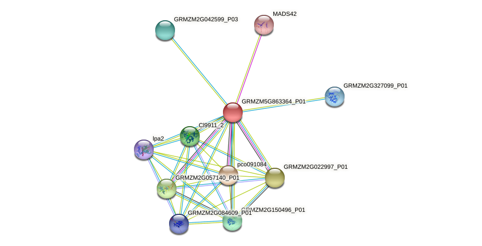 GRMZM5G863364_P01 protein (Zea mays) - STRING interaction network