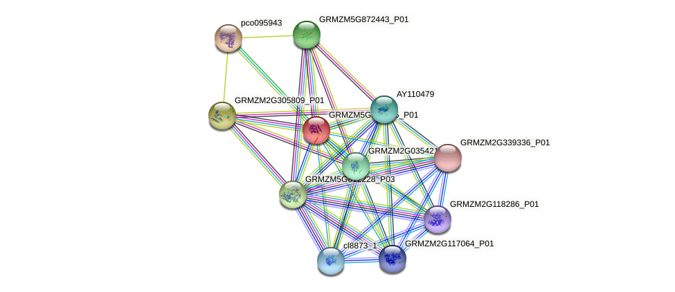 GRMZM5G863645_P01 protein (Zea mays) - STRING interaction network