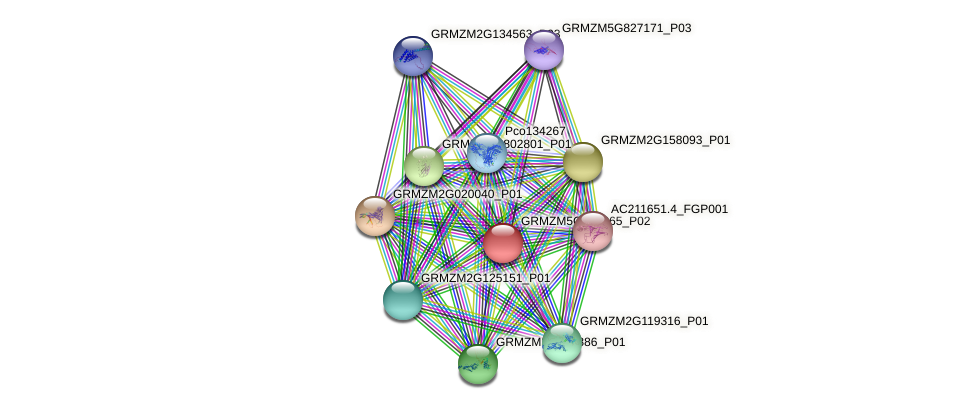 GRMZM5G864065_P02 protein (Zea mays) - STRING interaction network