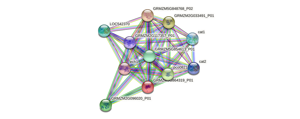 GRMZM5G864319_P01 protein (Zea mays) - STRING interaction network