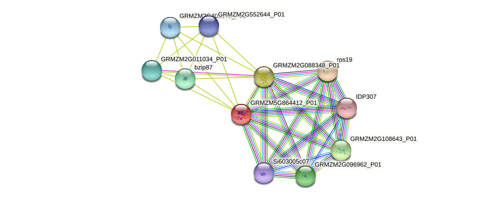 GRMZM5G864412_P01 protein (Zea mays) - STRING interaction network