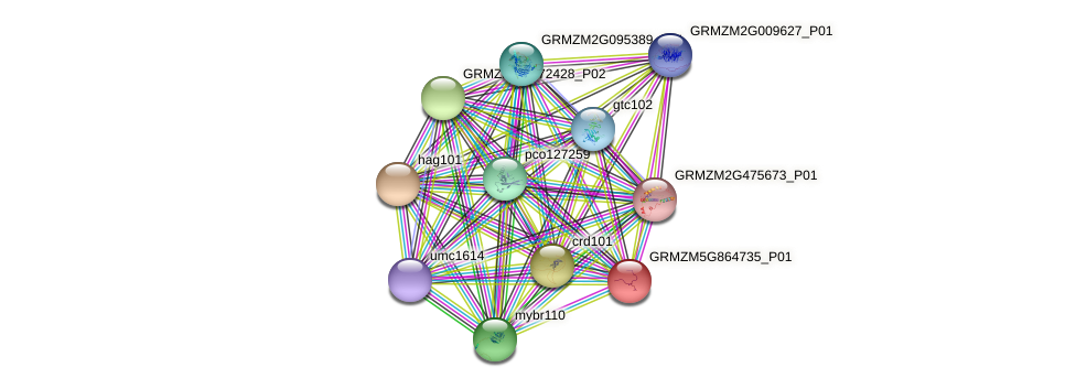 H3C3 protein (Zea mays) - STRING interaction network