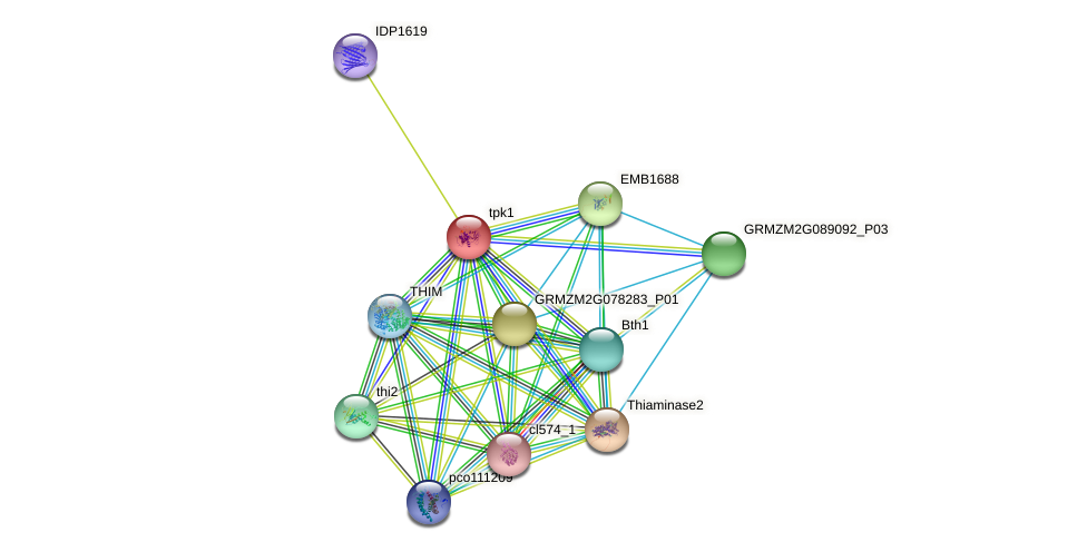 tpk1 protein (Zea mays) - STRING interaction network
