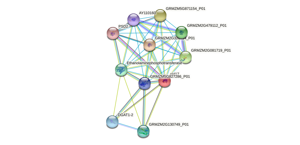 GRMZM5G865943_P01 protein (Zea mays) - STRING interaction network