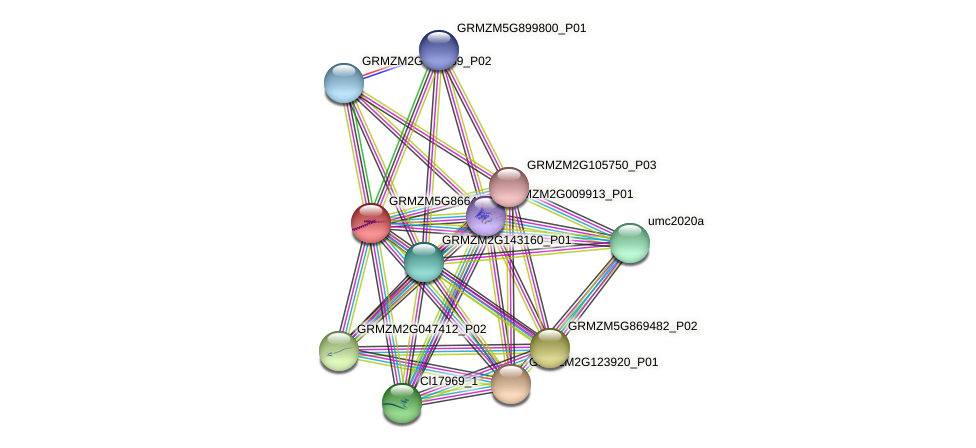GRMZM5G866465_P01 protein (Zea mays) - STRING interaction network