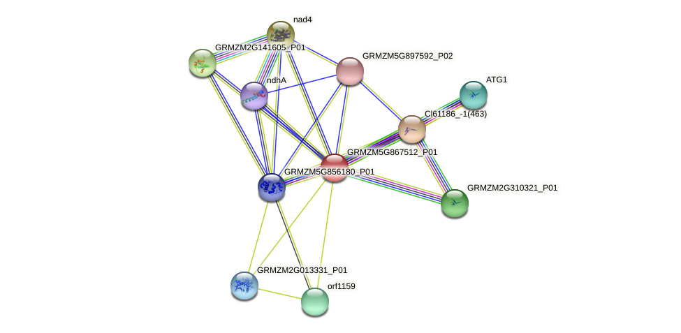 GRMZM5G867512_P01 protein (Zea mays) - STRING interaction network