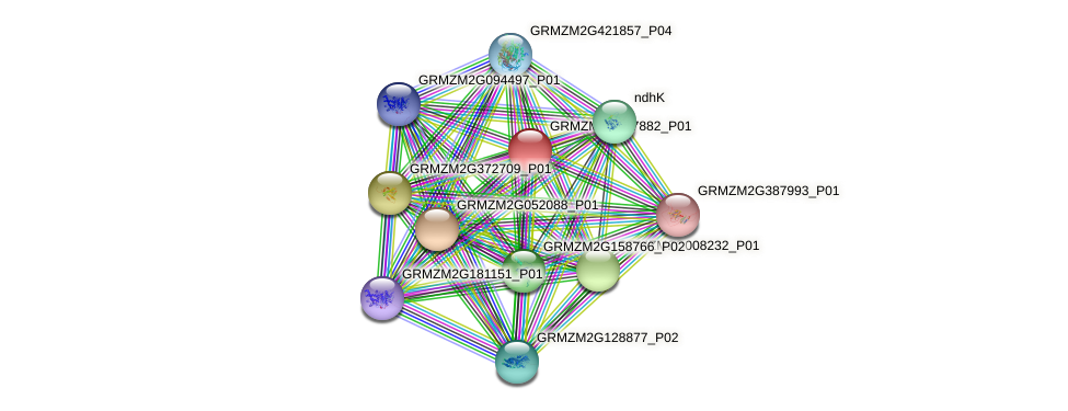 GRMZM5G867882_P01 protein (Zea mays) - STRING interaction network