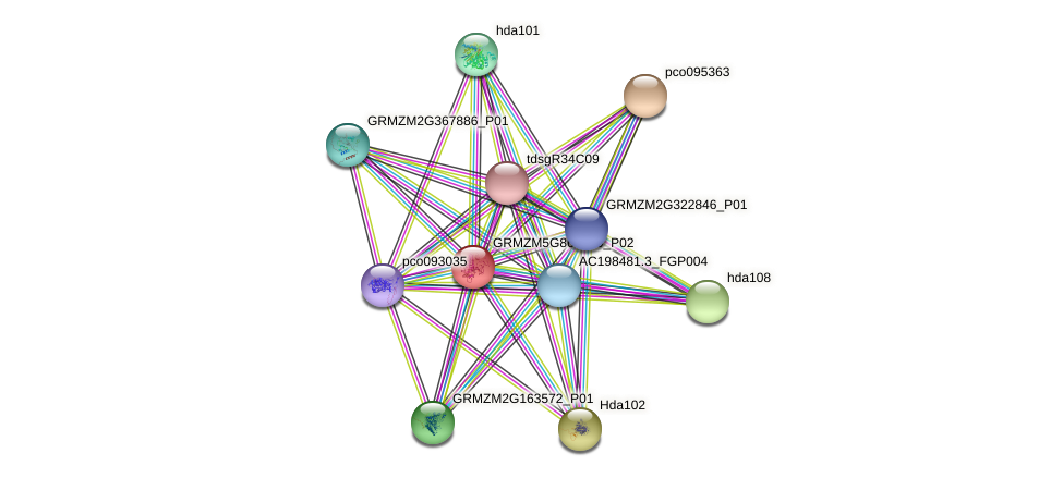 GRMZM5G868120_P02 protein (Zea mays) - STRING interaction network