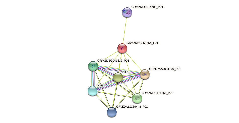 GRMZM5G868664_P01 protein (Zea mays) - STRING interaction network