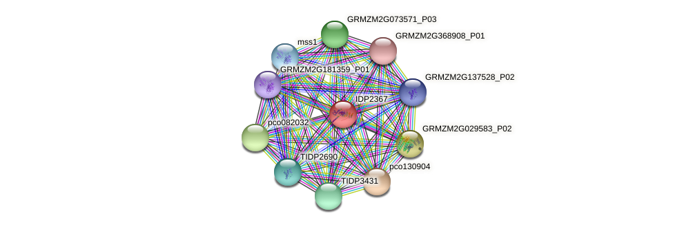 IDP2367 protein (Zea mays) - STRING interaction network