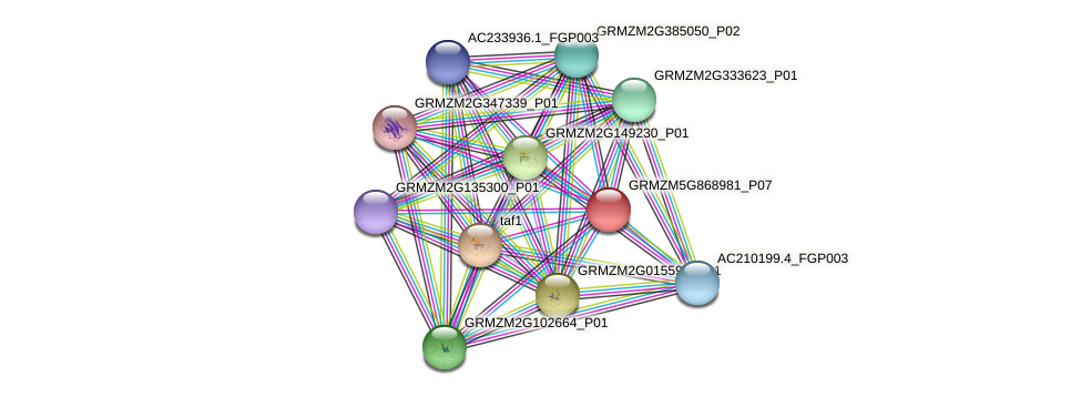 GRMZM5G868981_P07 protein (Zea mays) - STRING interaction network