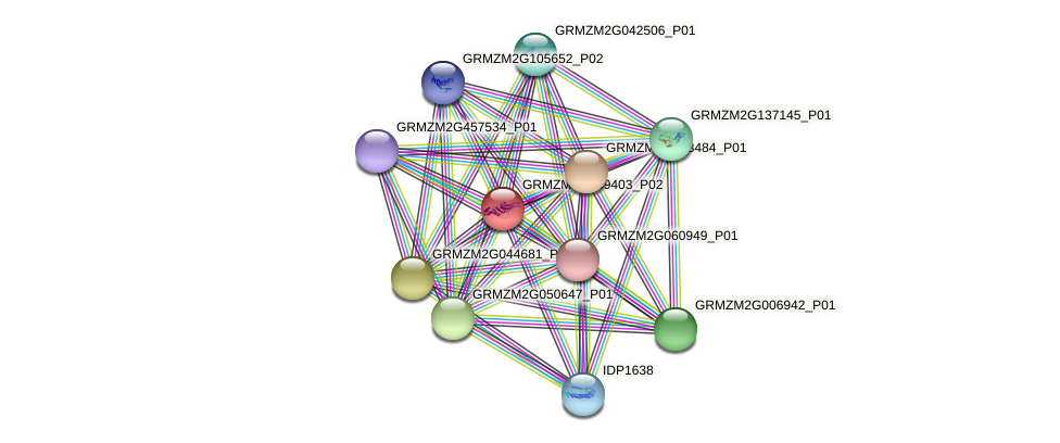 GRMZM5G869403_P02 protein (Zea mays) - STRING interaction network