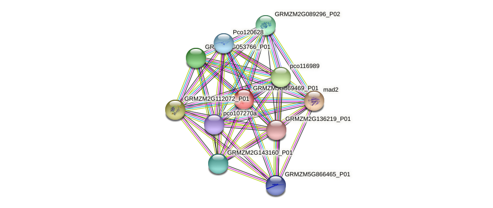 GRMZM5G869469_P01 protein (Zea mays) - STRING interaction network