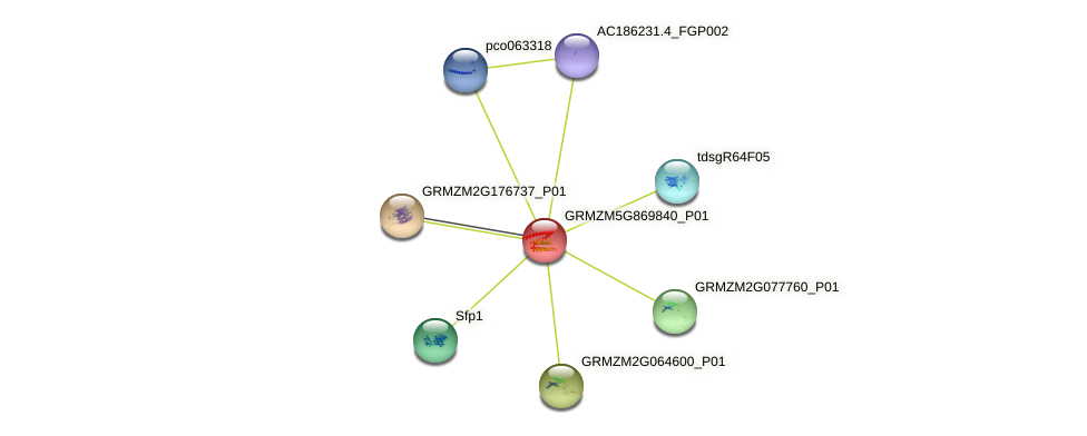 GRMZM5G869840_P01 protein (Zea mays) - STRING interaction network