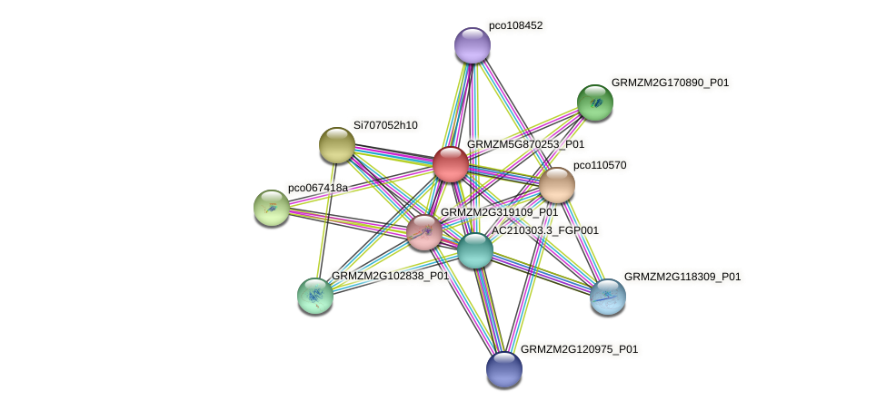 GRMZM5G870253_P01 protein (Zea mays) - STRING interaction network