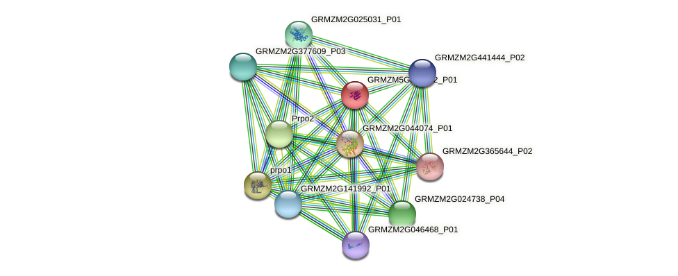 cpx1 protein (Zea mays) - STRING interaction network