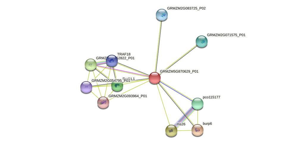 GRMZM5G870629_P01 protein (Zea mays) - STRING interaction network