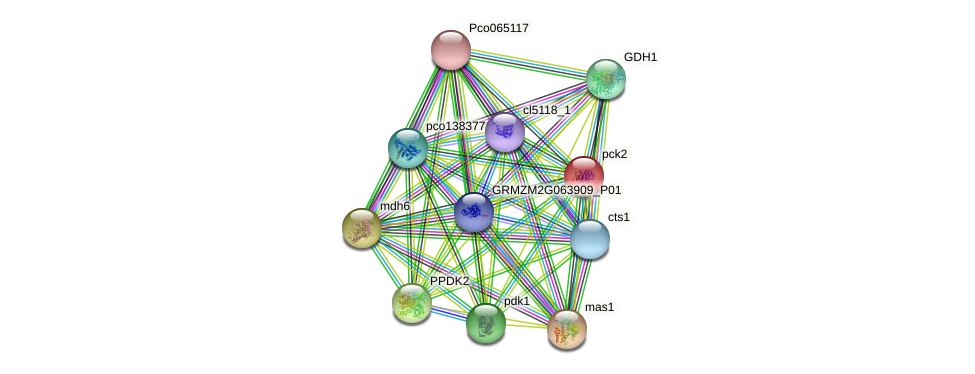 pck2 protein (Zea mays) - STRING interaction network