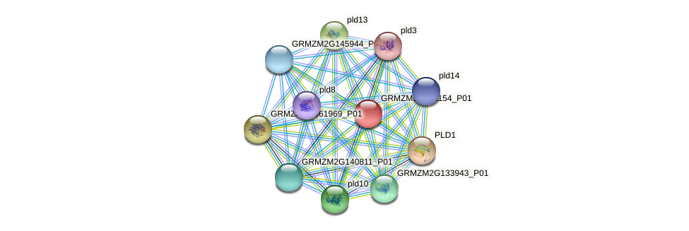 GRMZM5G871154_P01 protein (Zea mays) - STRING interaction network