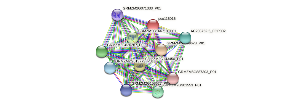 pco116016 protein (Zea mays) - STRING interaction network