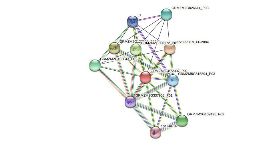 GRMZM5G872007_P01 protein (Zea mays) - STRING interaction network