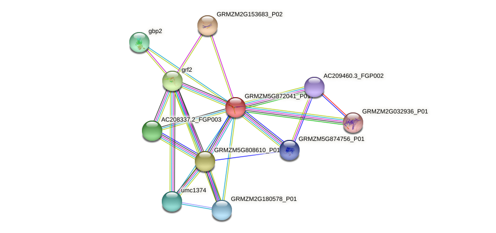 GRMZM5G872041_P01 protein (Zea mays) - STRING interaction network