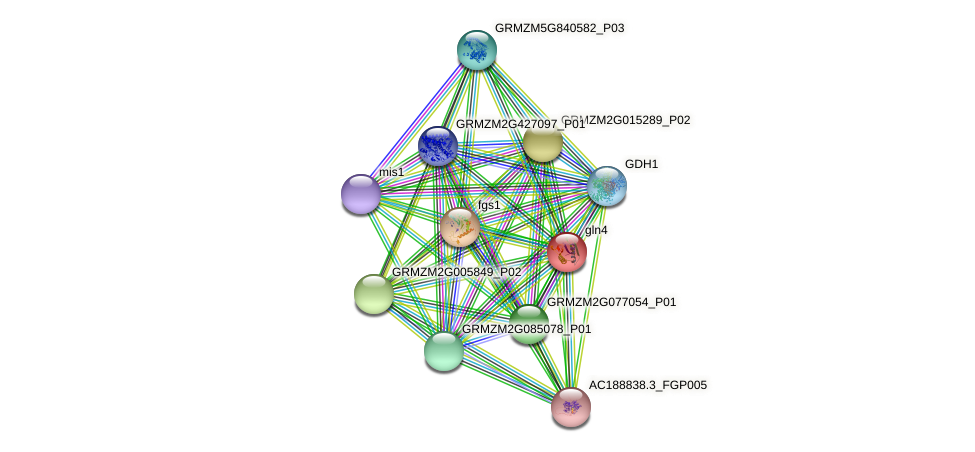 GLN4 protein (Zea mays) - STRING interaction network
