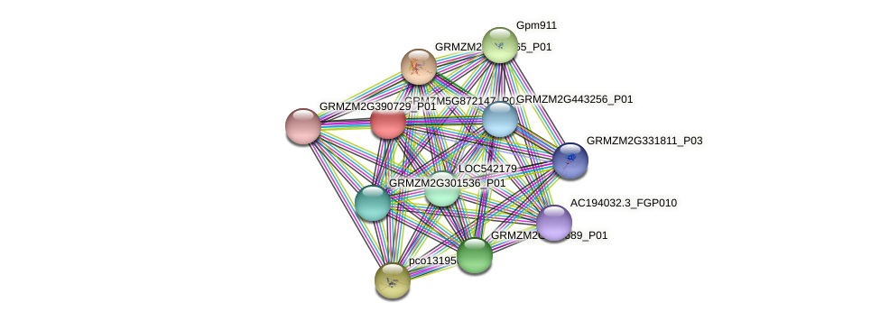 GRMZM5G872147_P02 protein (Zea mays) - STRING interaction network