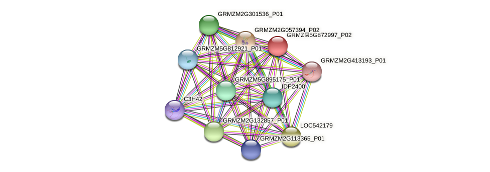 GRMZM5G872997_P02 protein (Zea mays) - STRING interaction network