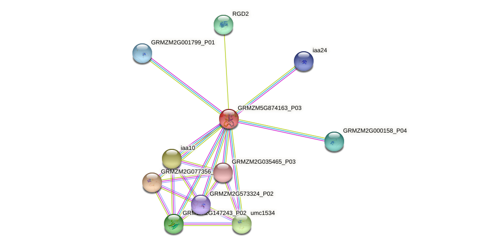 arf26 protein (Zea mays) - STRING interaction network