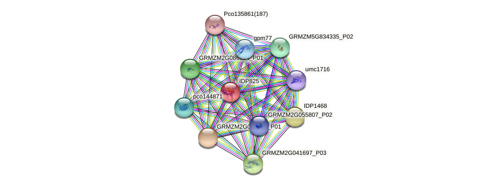 IDP825 protein (Zea mays) - STRING interaction network