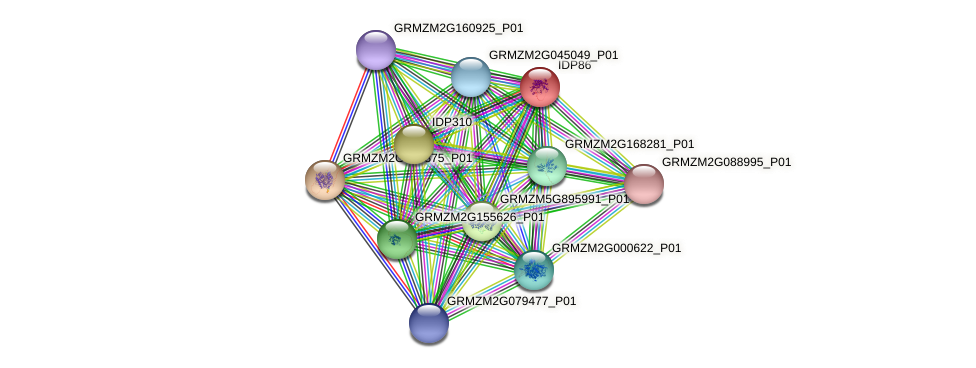 IDP86 protein (Zea mays) - STRING interaction network