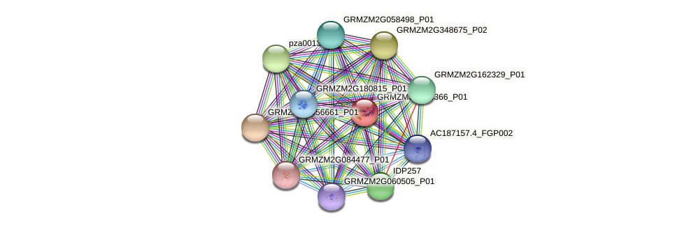 GRMZM5G874366_P01 protein (Zea mays) - STRING interaction network
