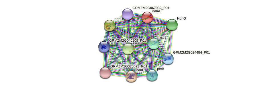 ndhA protein (Zea mays) - STRING interaction network