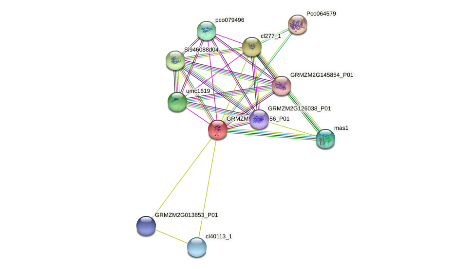 GRMZM5G875456_P01 protein (Zea mays) - STRING interaction network