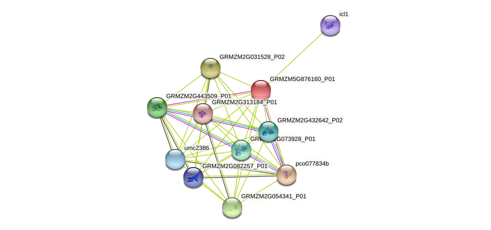 GRMZM5G876160_P01 protein (Zea mays) - STRING interaction network