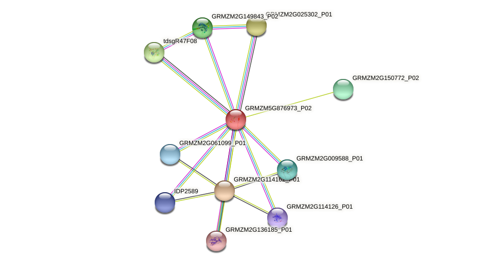 GRMZM5G876973_P02 protein (Zea mays) - STRING interaction network