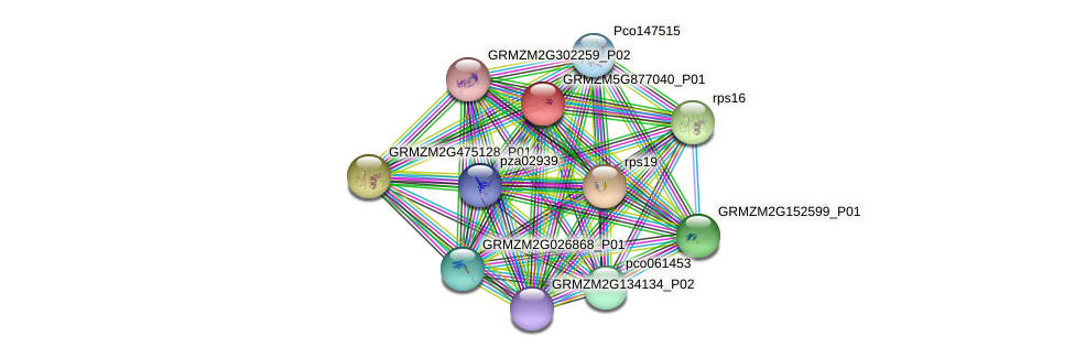 GRMZM5G877040_P01 protein (Zea mays) - STRING interaction network