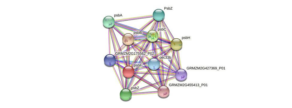 GRMZM5G877110_P01 protein (Zea mays) - STRING interaction network