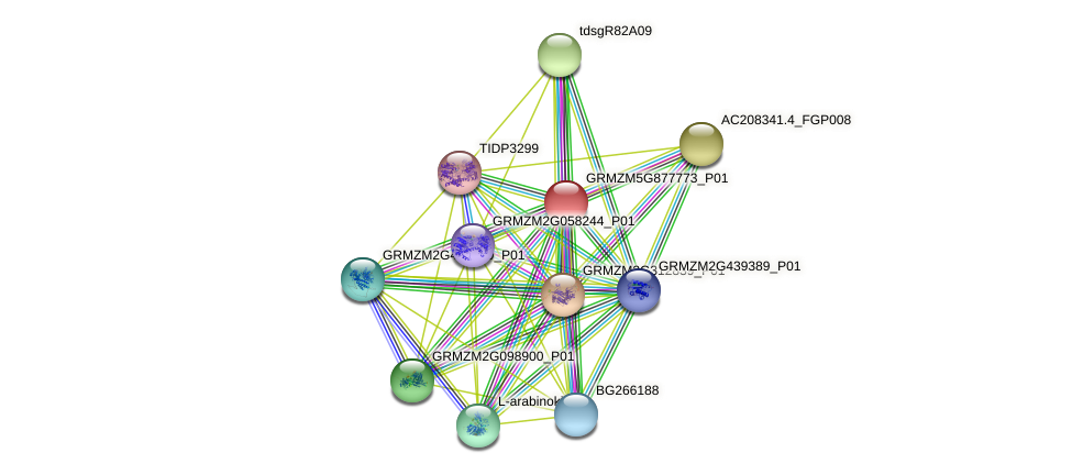 GRMZM5G877773_P01 protein (Zea mays) - STRING interaction network