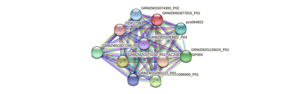 GRMZM5G877815_P01 protein (Zea mays) - STRING interaction network