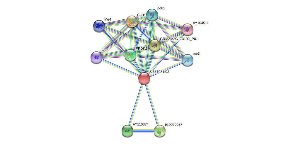 GRMZM5G877941_P01 protein (Zea mays) - STRING interaction network