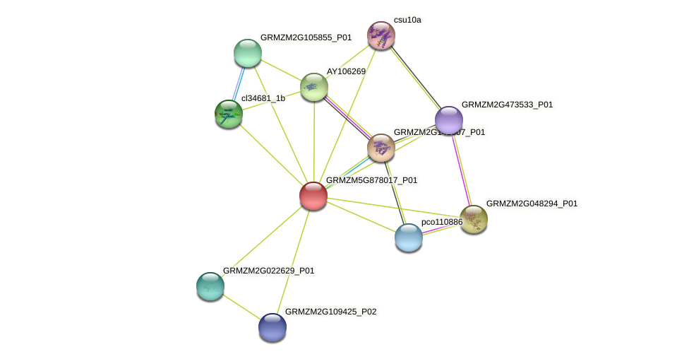 GRMZM5G878017_P01 protein (Zea mays) - STRING interaction network