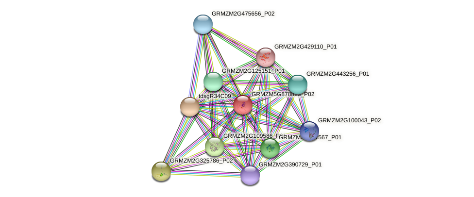 GRMZM5G878823_P02 protein (Zea mays) - STRING interaction network