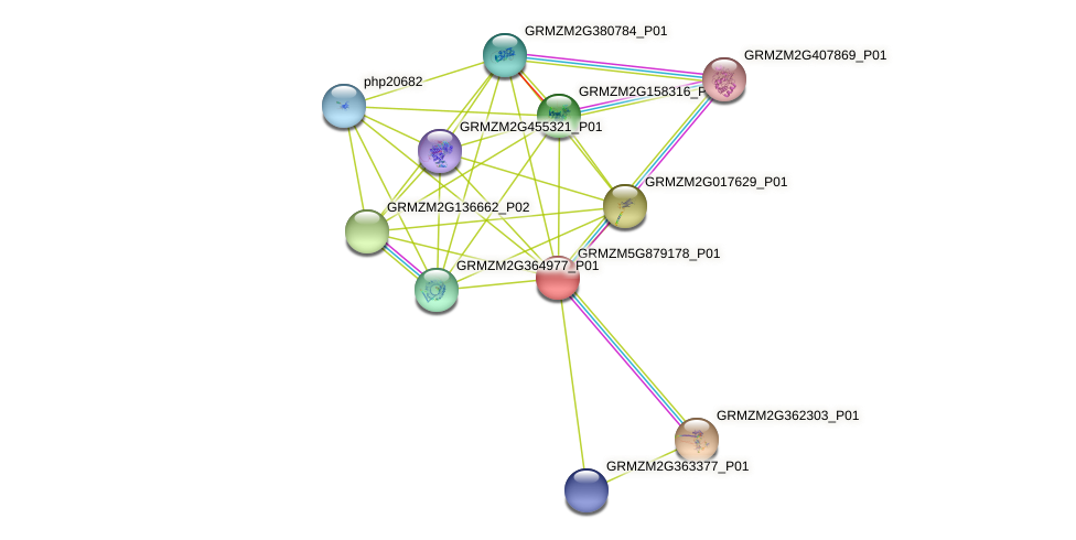 Zm.97577 protein (Zea mays) - STRING interaction network