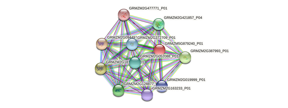 GRMZM5G879240_P01 protein (Zea mays) - STRING interaction network
