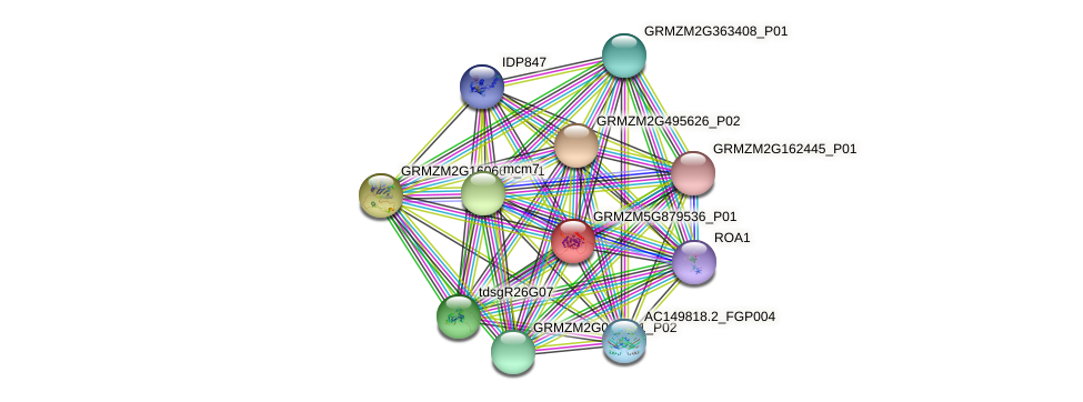 Zm.34237 protein (Zea mays) - STRING interaction network