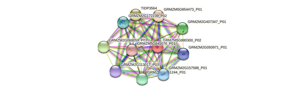 GRMZM5G880300_P02 protein (Zea mays) - STRING interaction network